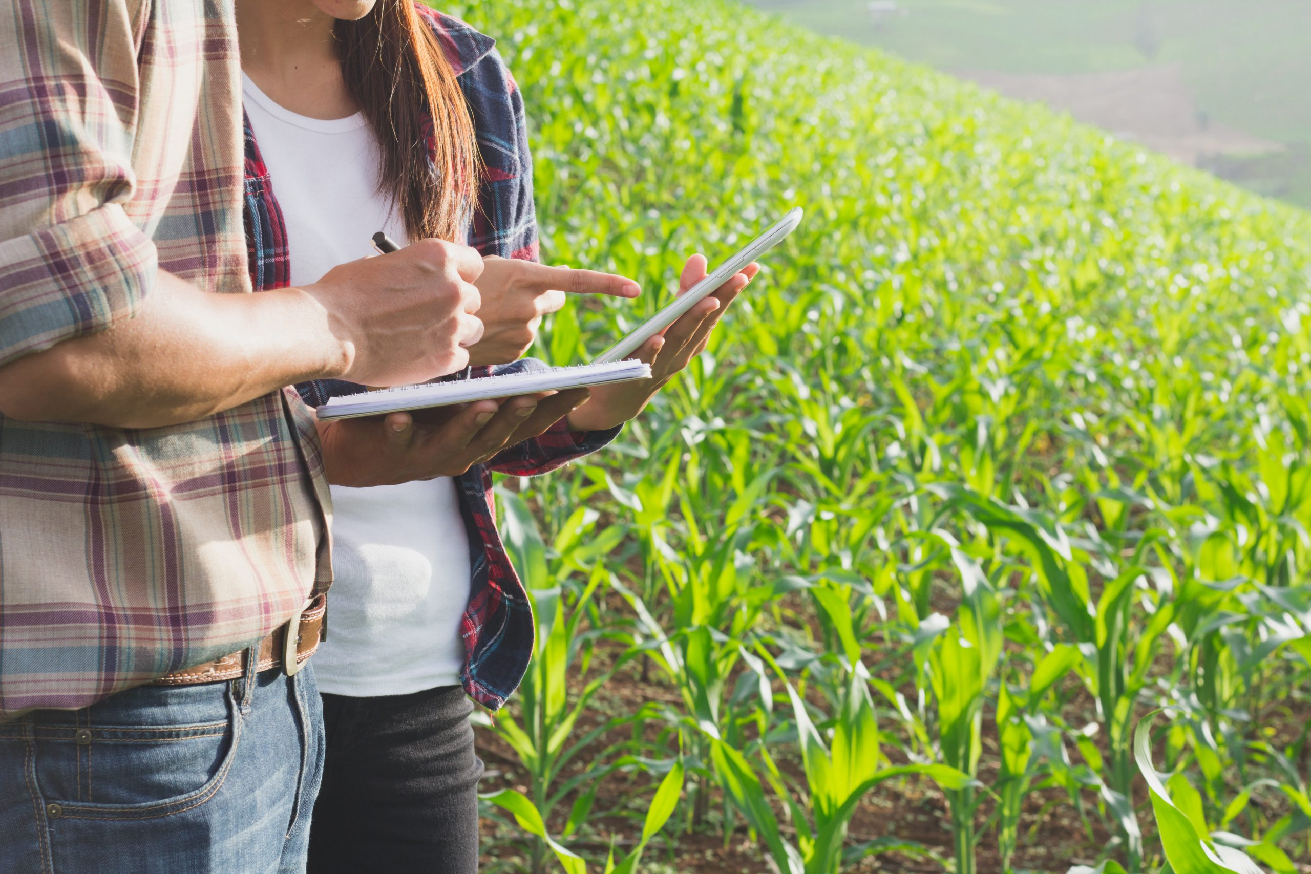 Farmers examining crops for care