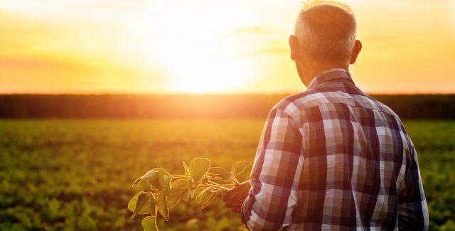 Molasses for Plants: Is It Good for Plants & Soil?